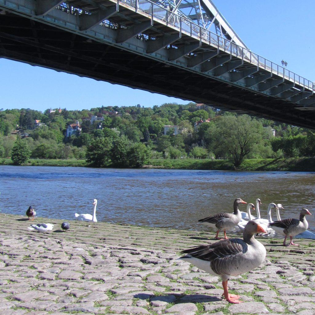Leben an der Elbe